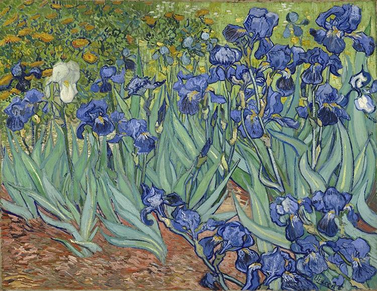 Irises Vincent Van Gogh