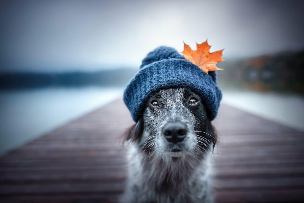 Cute Dog Wearing a Hat