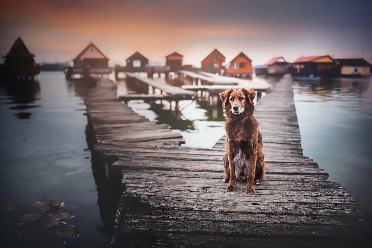 Fotos de viajes con perros