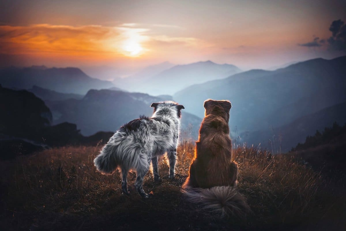 Dog Photography With Beautiful Landscape