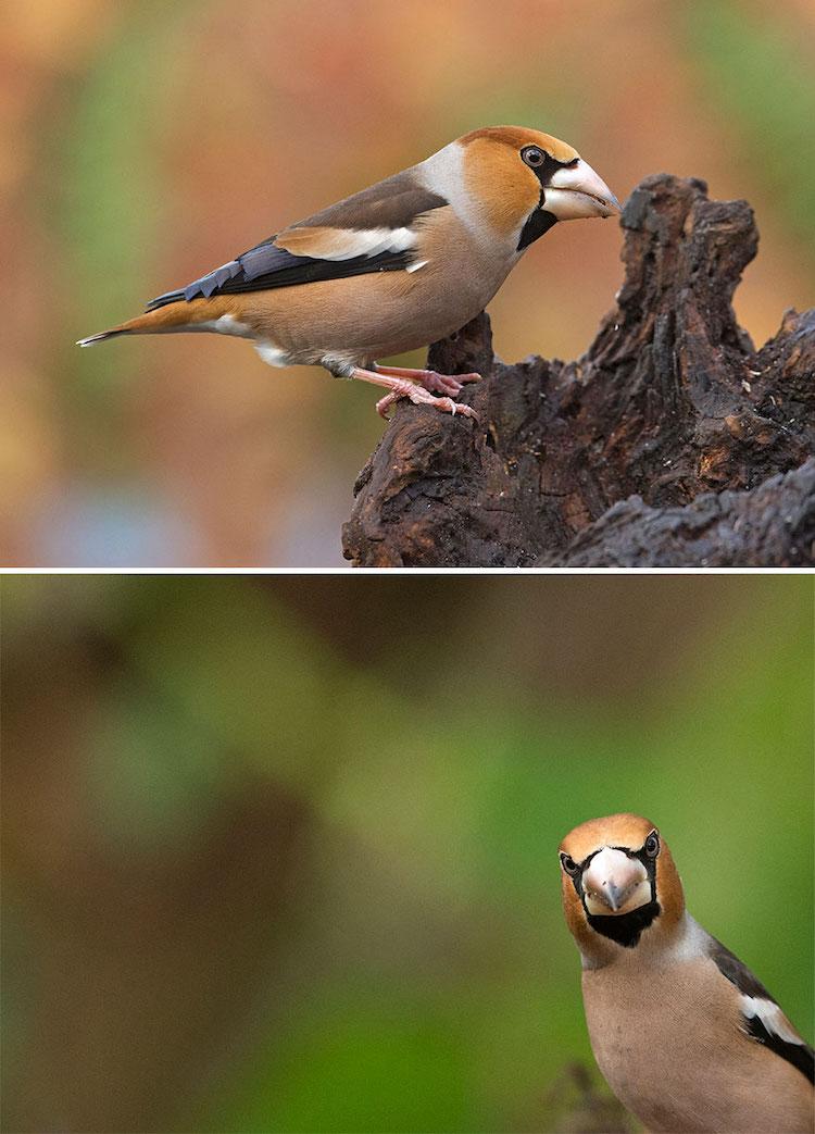 Wildlife Bird Photos