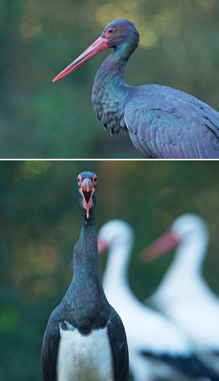Funny Bird Photos