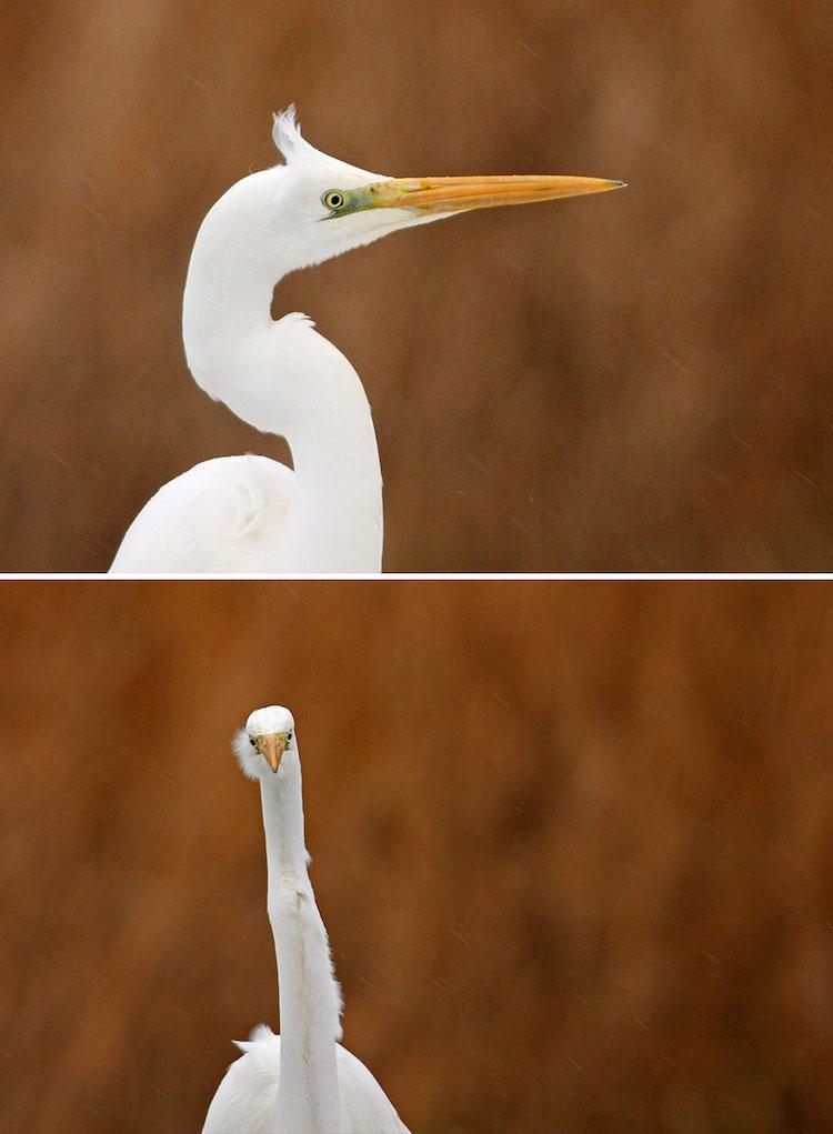 Straight-On Bird Photos