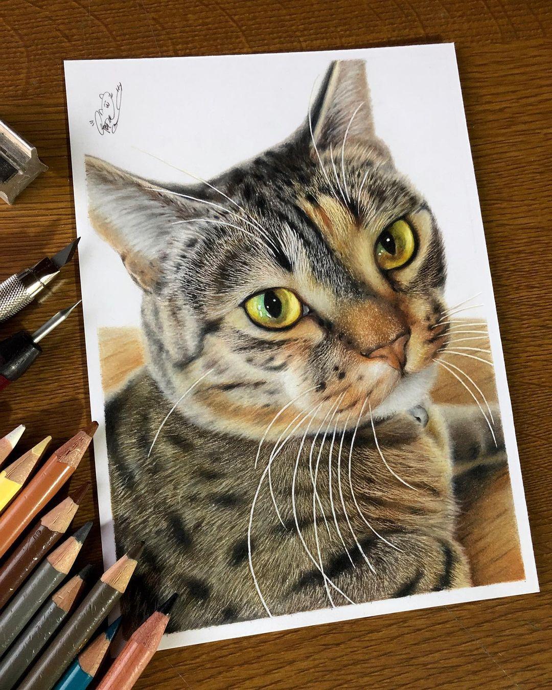 Hyperrealistic Cat Drawings by Haruki Kudo
