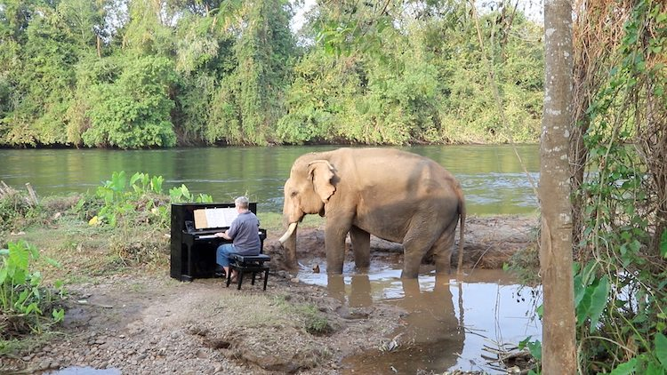 Pianist Paul Barton Plays Classical Music For Rescue Elephant In Thailand