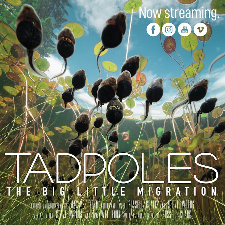 Tadpoles: The Big Little Migration Documentary by Maxwel Hohn