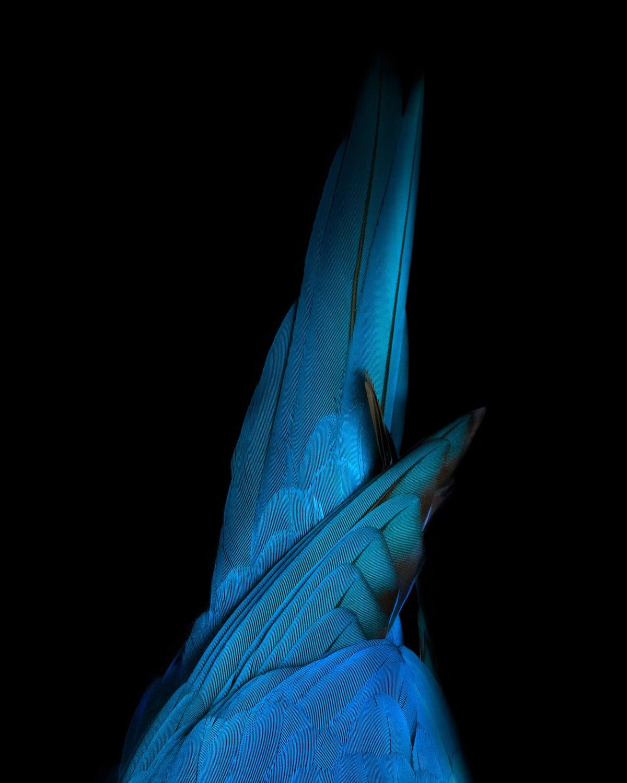 fotografía de aves por Tom Leighton