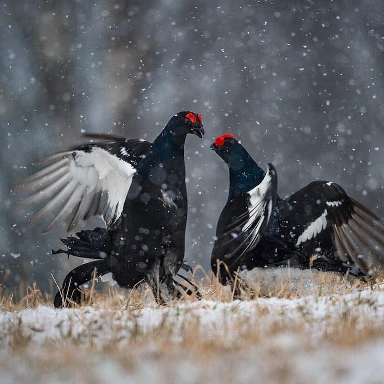 Wildlife Photography by Andrea Zampatti
