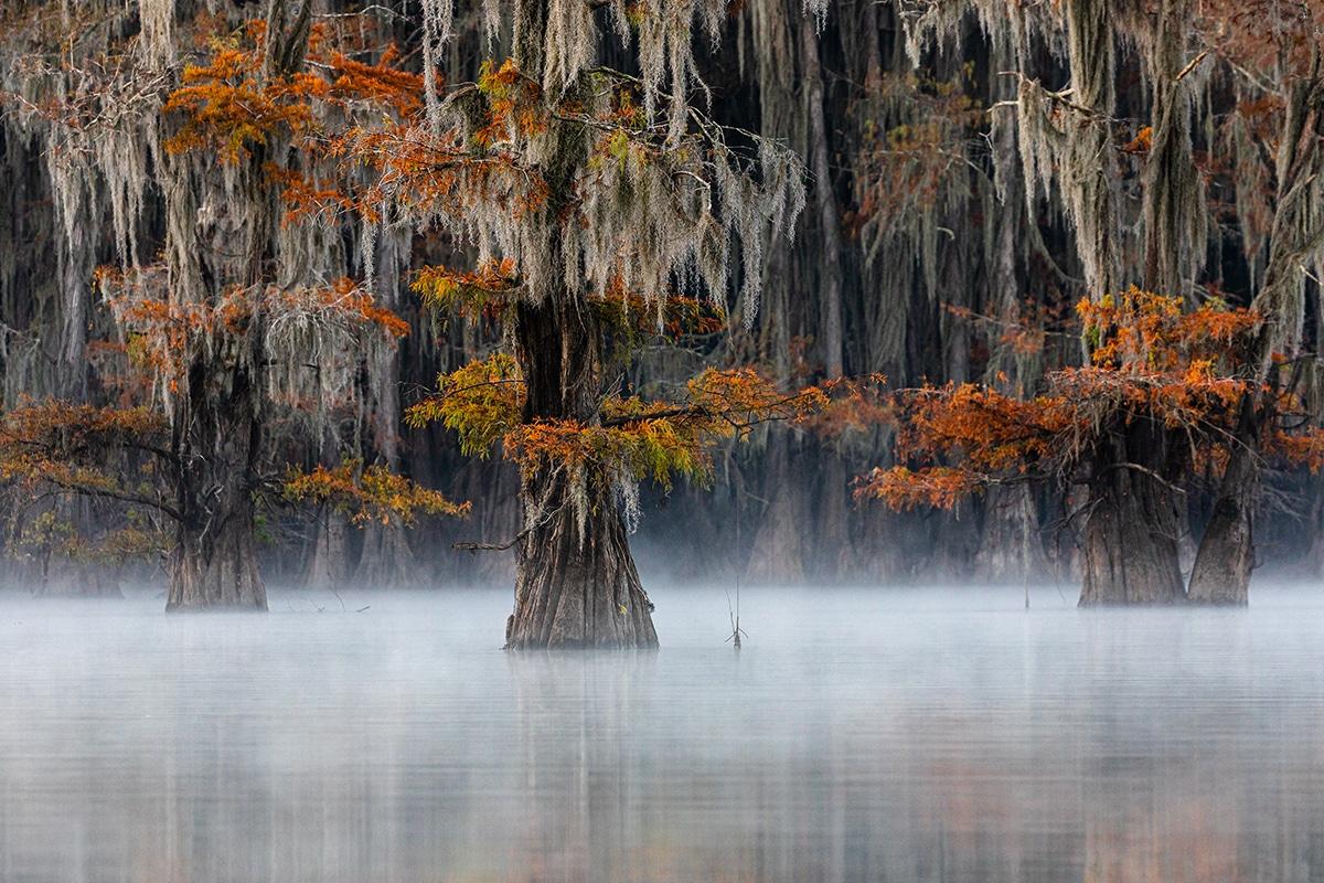 GOLD © Doron Talmi Mist at the Swamp