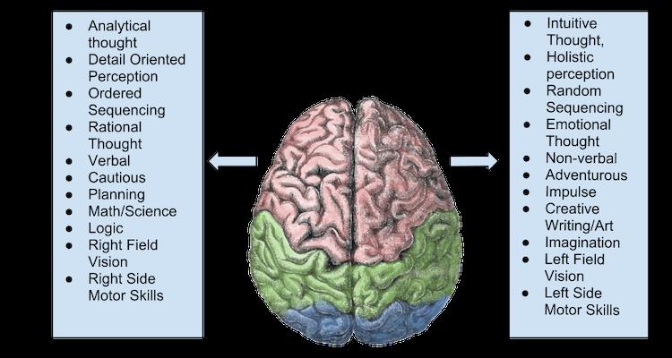 Brain Laterality