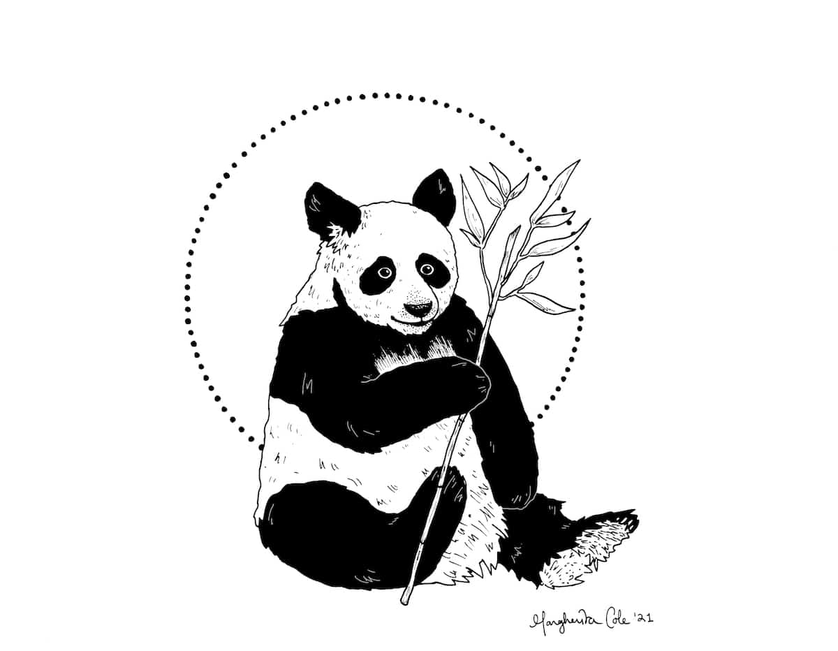 How to Draw a Panda Tutorial by Margherita Cole
