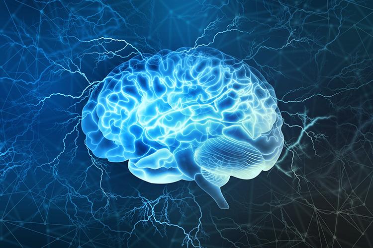 Human Brain Neuroscience Neurobiology