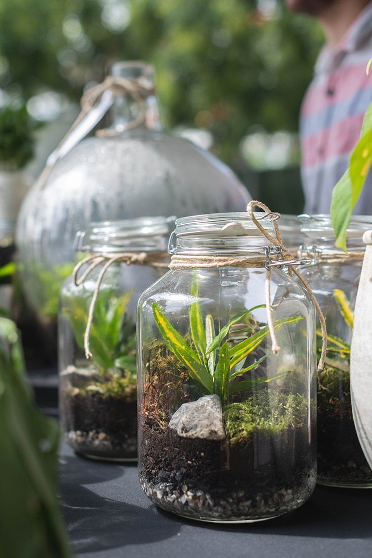 Mason Jar Terrarium Plants