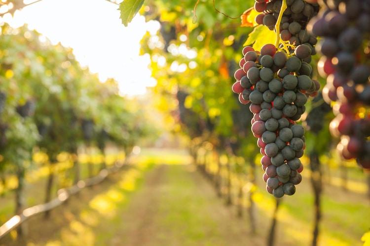 Murphy-Goode Winery Job