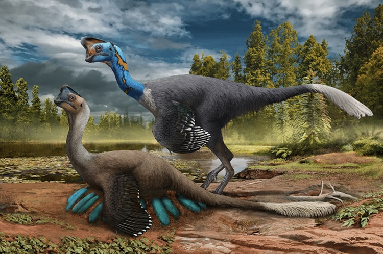 Dinosaur Nest With Unhatched Fossilized Embryos Found In China, Nest is Oviraptorid Theropod