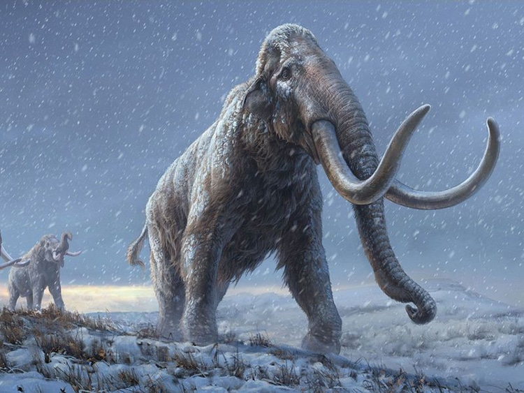 Oldest DNA Mammoth Siberia Paleogenetics