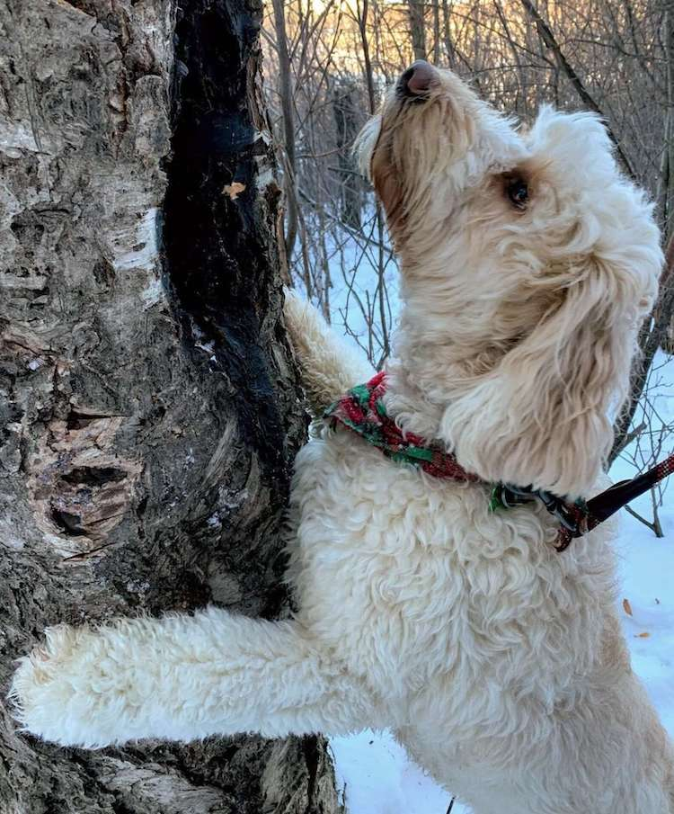 Stick Library for Dogs Doodles of Saskatoon
