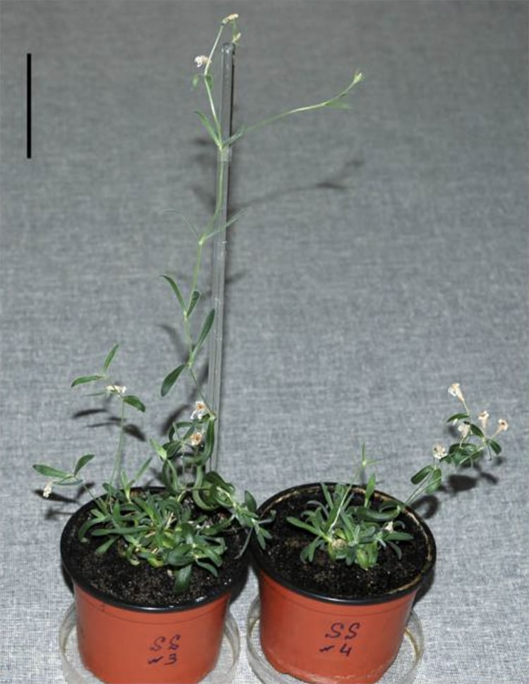 Ancient Prehistoric PLant DNA from Permafrost