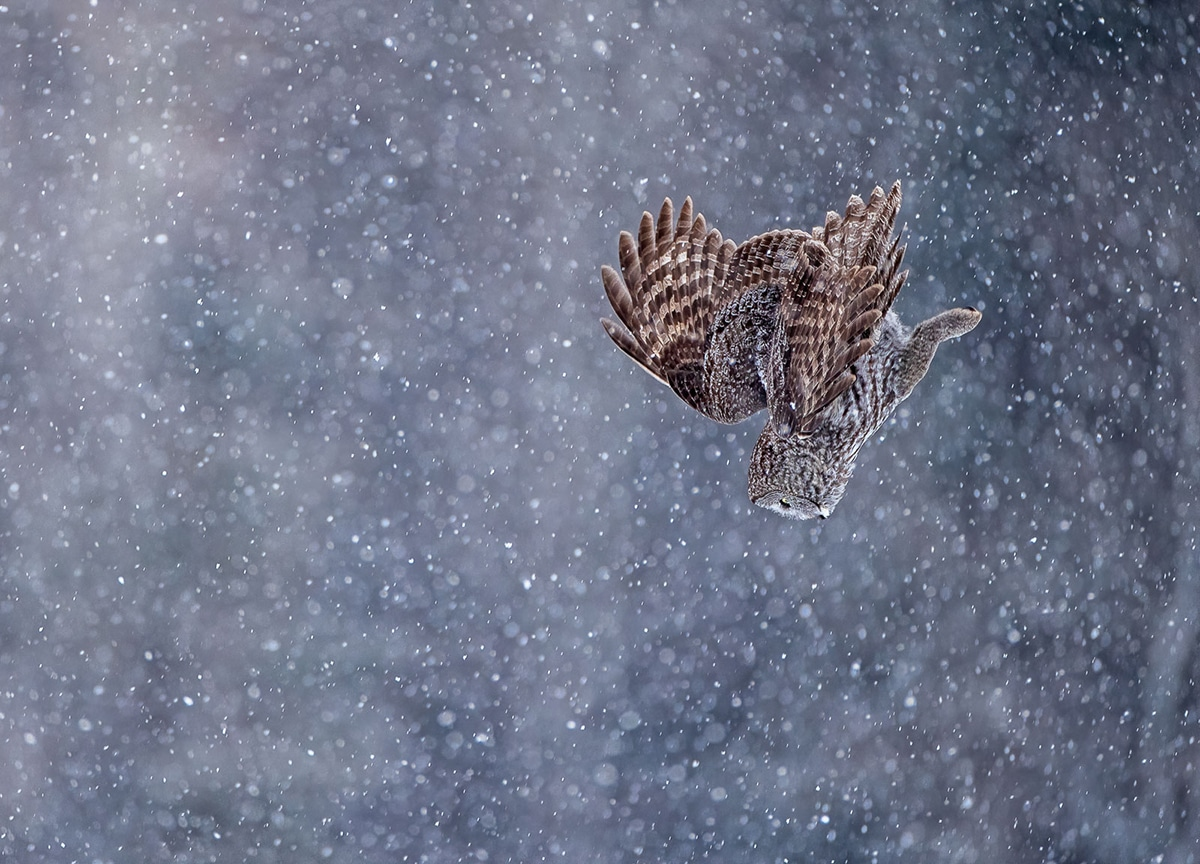 Buir and Wildlife Photography
