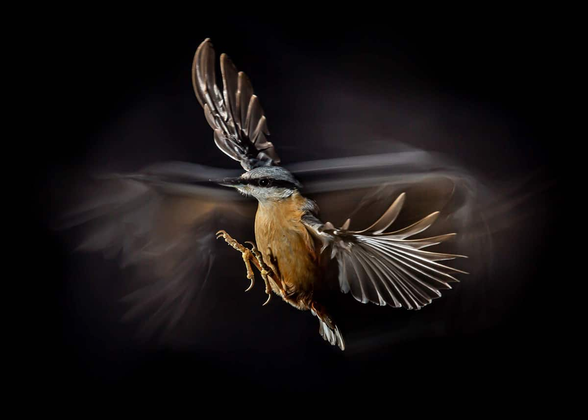 Bird Photographer of the Year 2021 Photo Contest