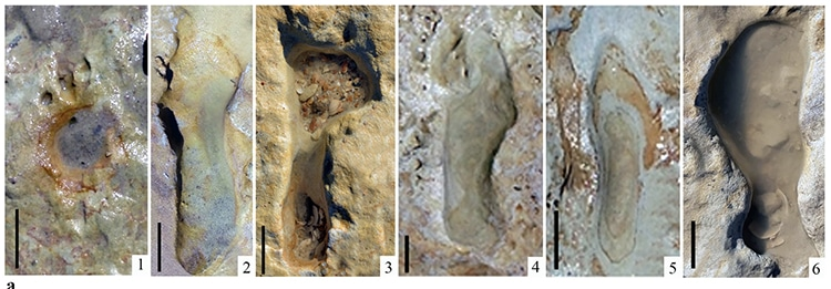 Neanderthal Footprints Found in Spain 100,000 Years Old