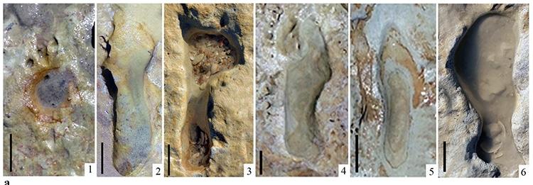 Neanderthal Footprints Found in Spain 100,000 Years Old