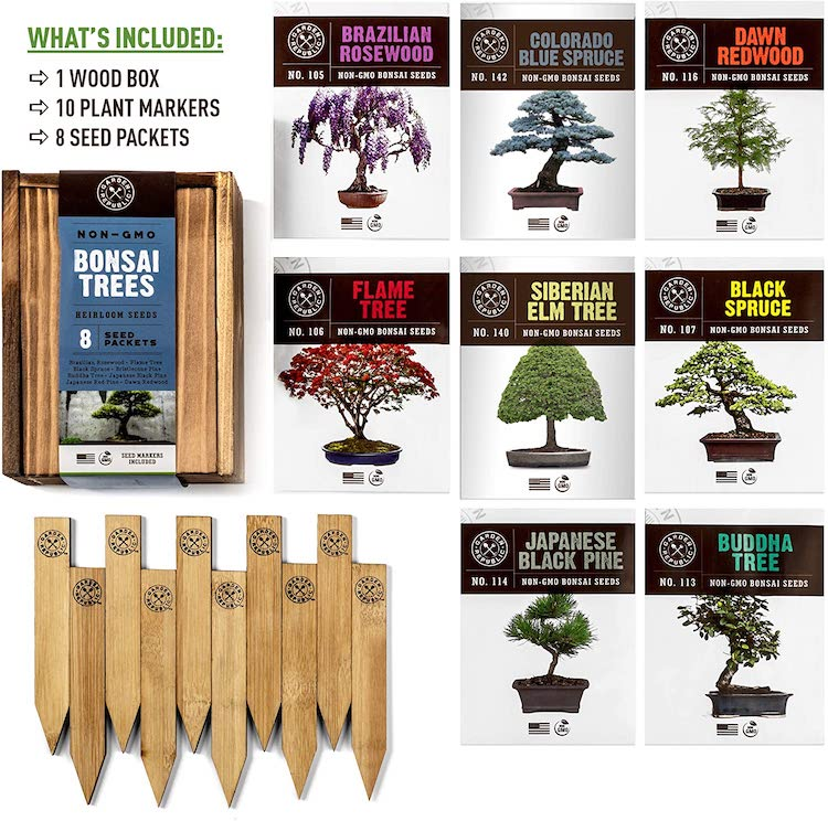 Amazon Bonzai Tree Kit Seed Variety Pack