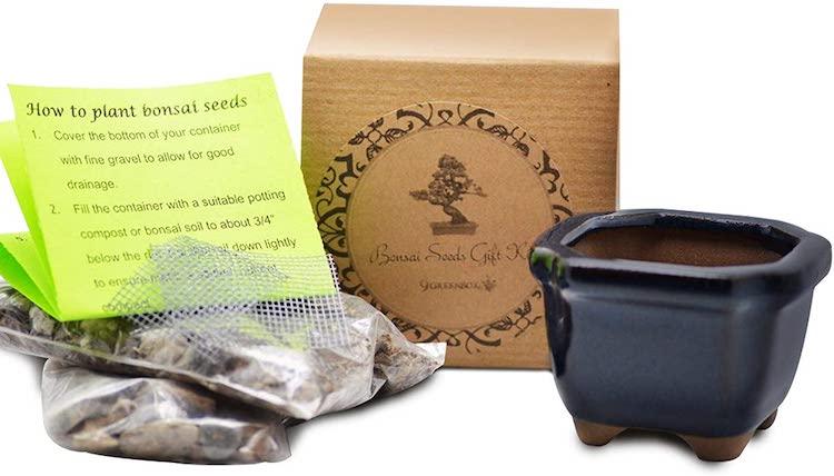 Amazon Bonsai Tree Kit
