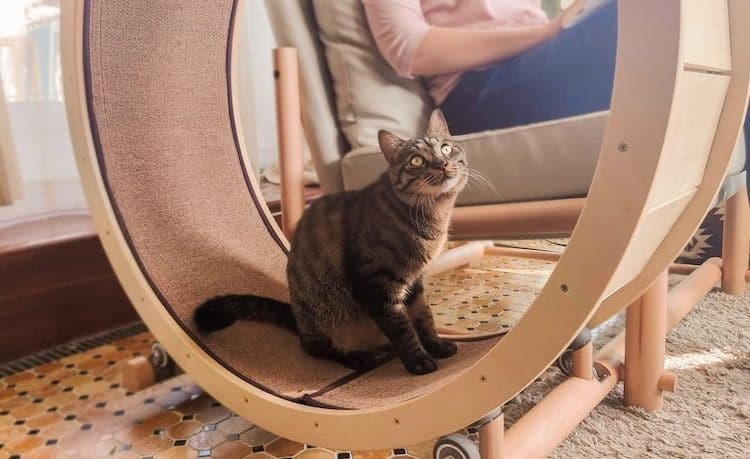 Cat Exercise Wheel Loveseat by Catham City