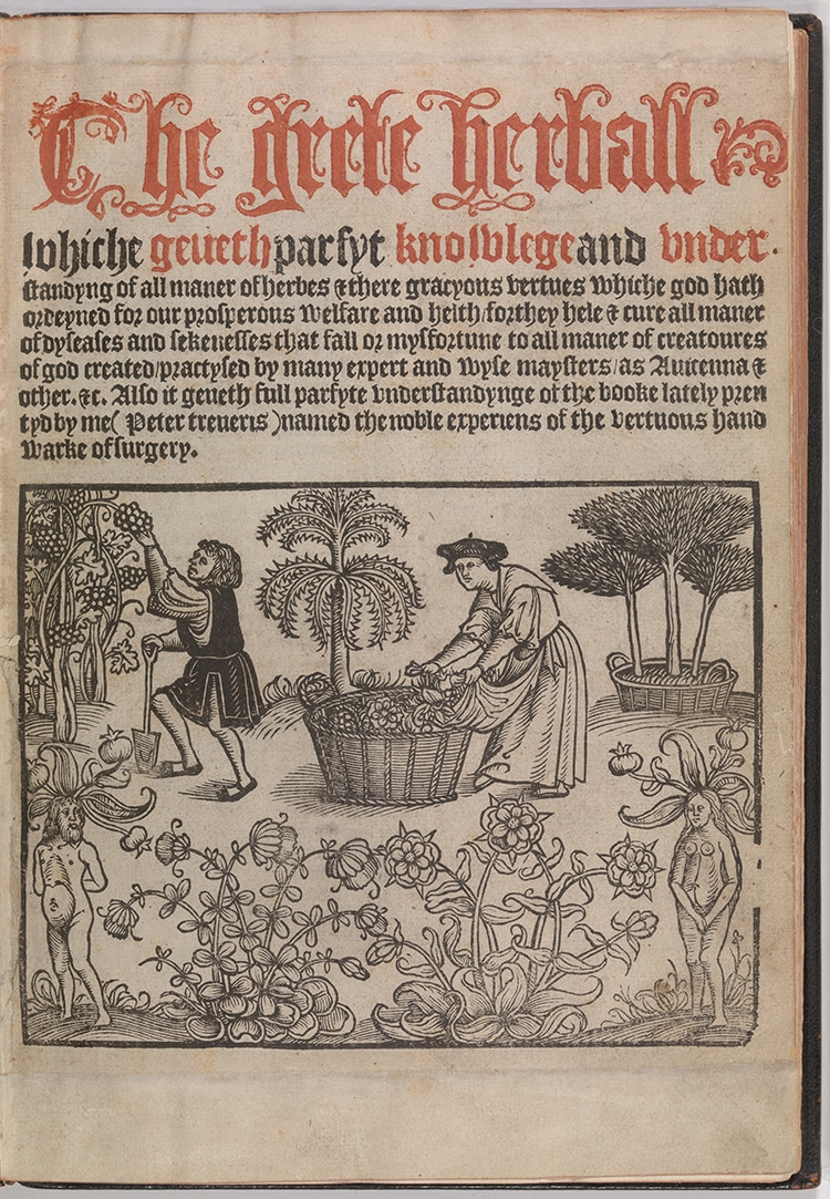 The Grete Herball Renaissance Text