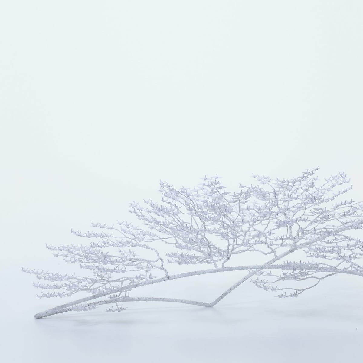 Naoki Onogawa Paper Cranes