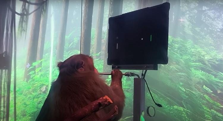 Monkey Playiying Videogame Using Neuralink Wireless BMI