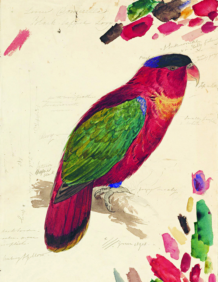 Parrot Werners Nomenclature Color Theory