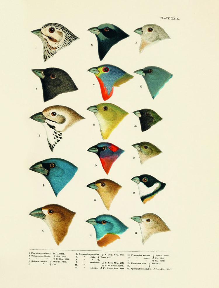 Teoría del color en la naturaleza del libro Nature's Palette