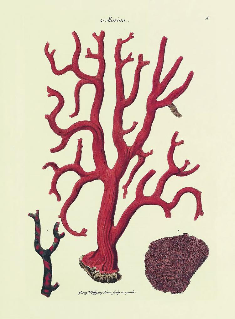 Ejemplo del color rojo en el coral