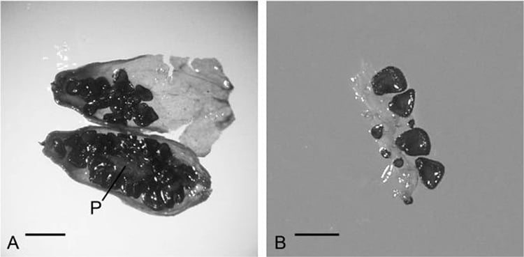 Fruit DNA Found Resurrects Ancient Plant