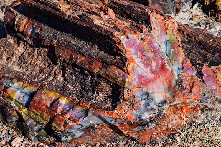 Close Up View of Petrified Wood