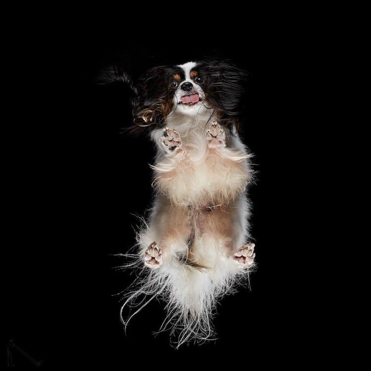 Underlook Pet Photography Series by Andrius Burba