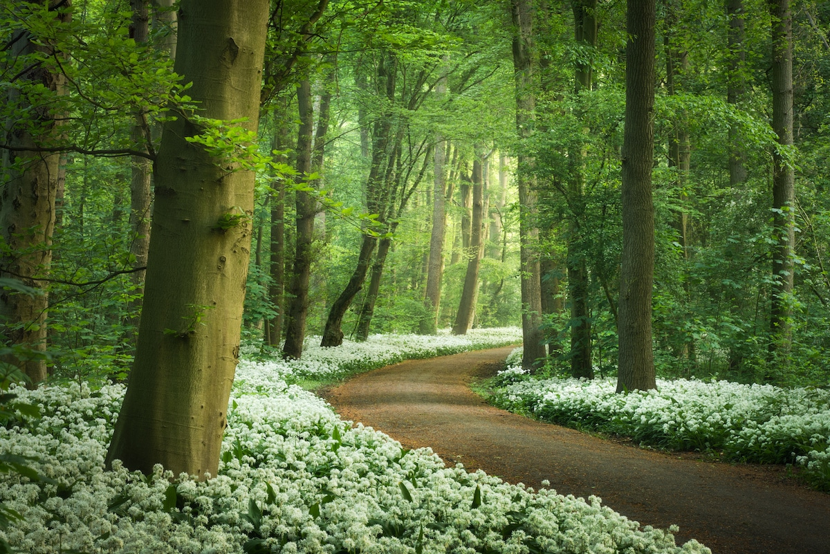 Forest in the Netherlands in the Spring