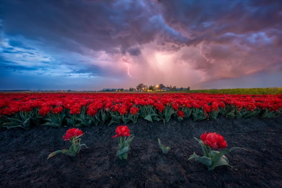 Thunderstorm Over Tulip Field