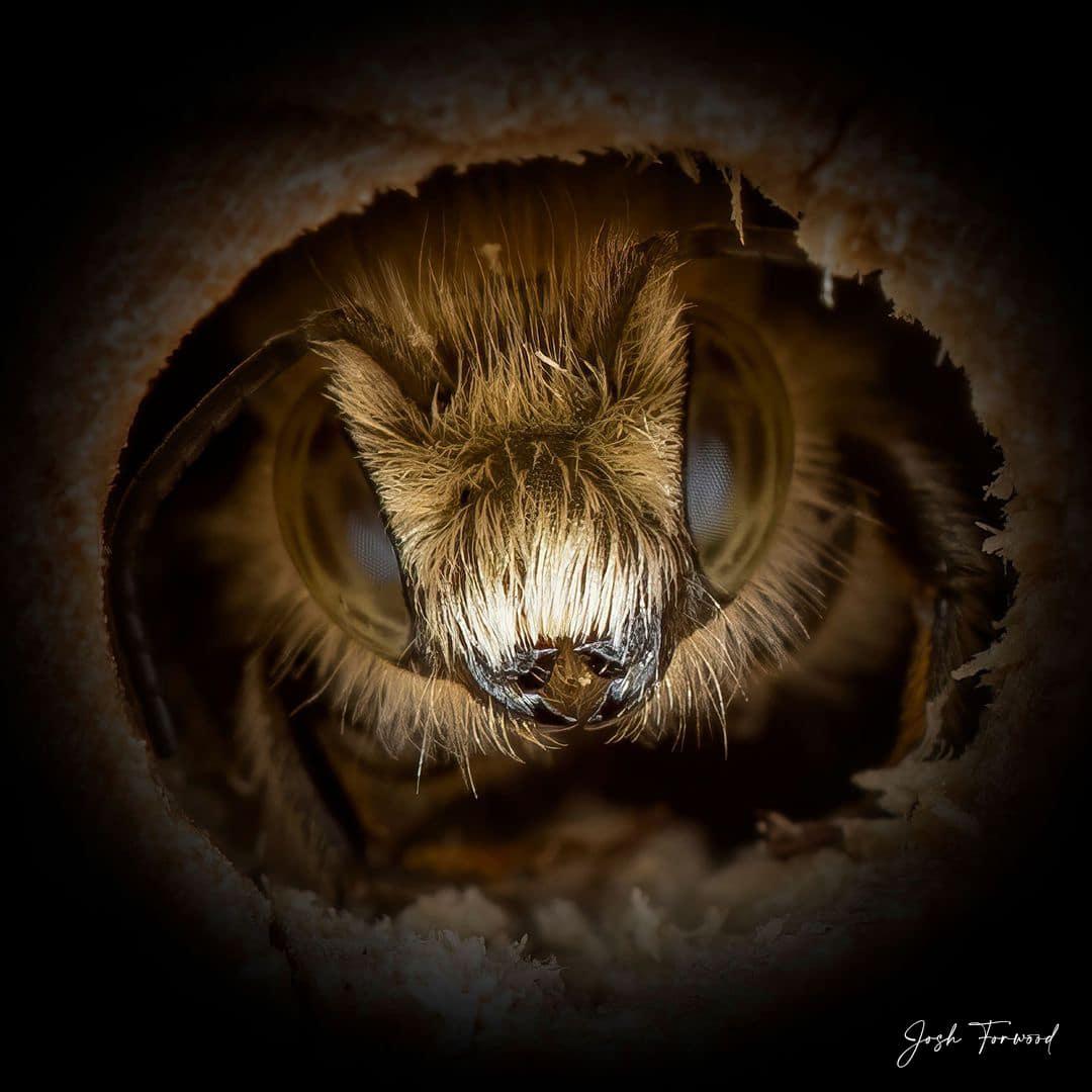 Close Look at a Bee
