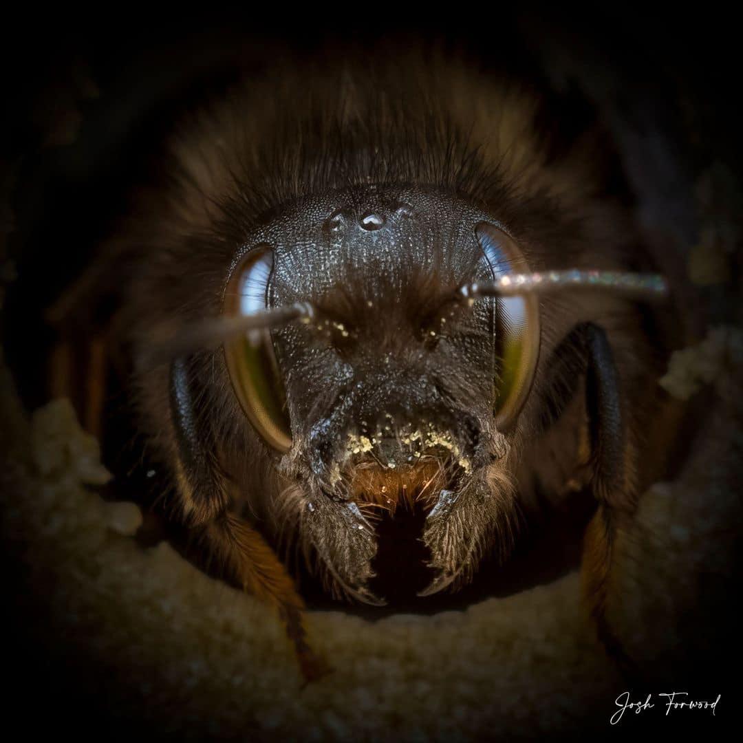 Macro Look at a Bee