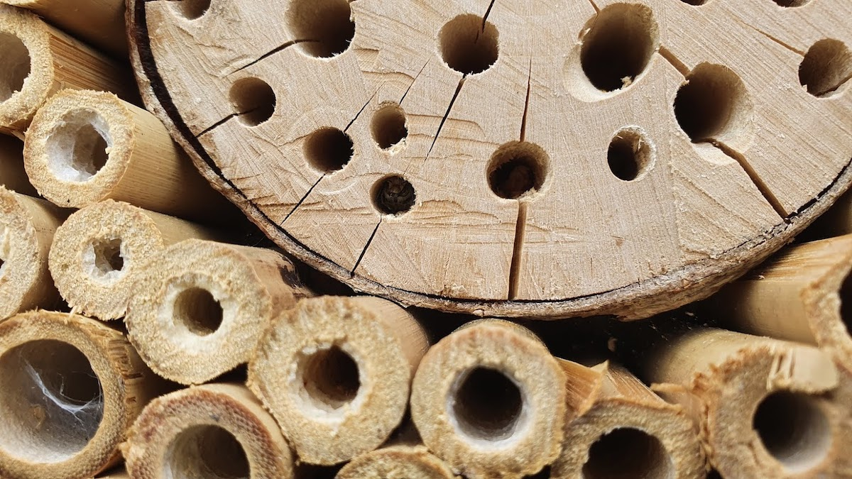 Bee Hotel by Josh Forwood