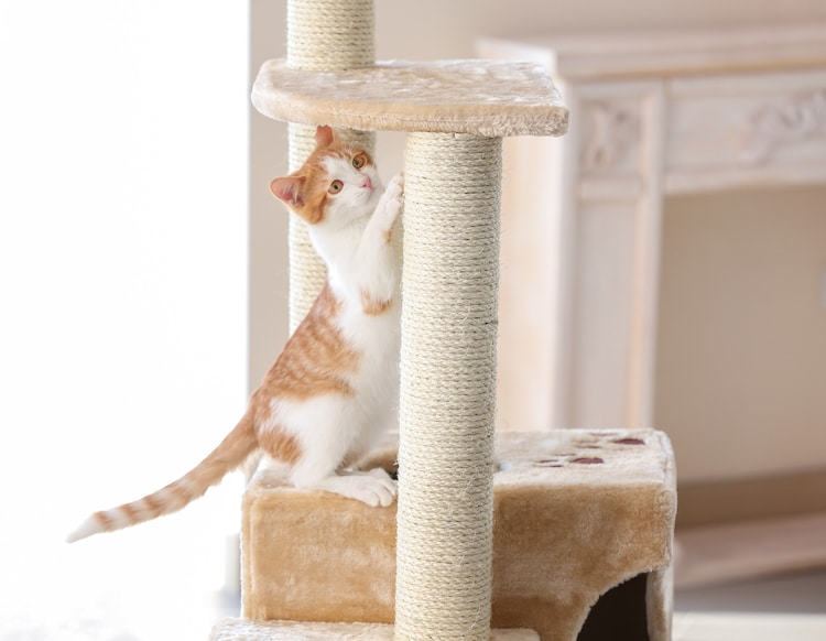 Cat Playing on a Cat Tower
