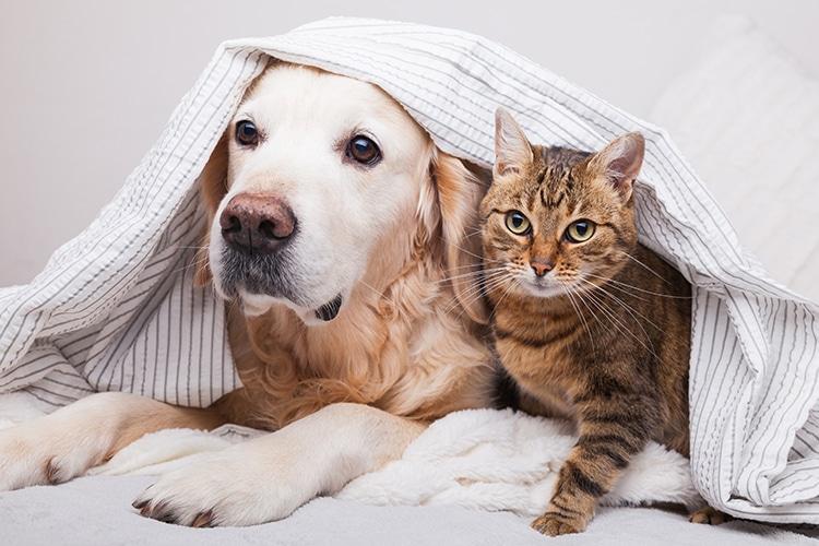 perro y gato bajo sábana
