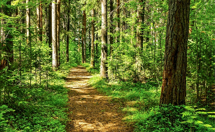Global Forest Increase the Size of France Since 2000