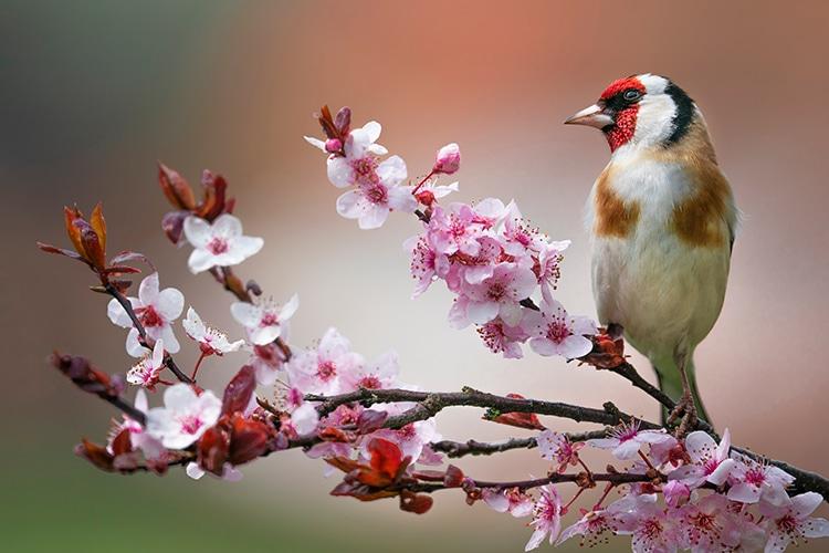 cuantas aves hay en el planeta