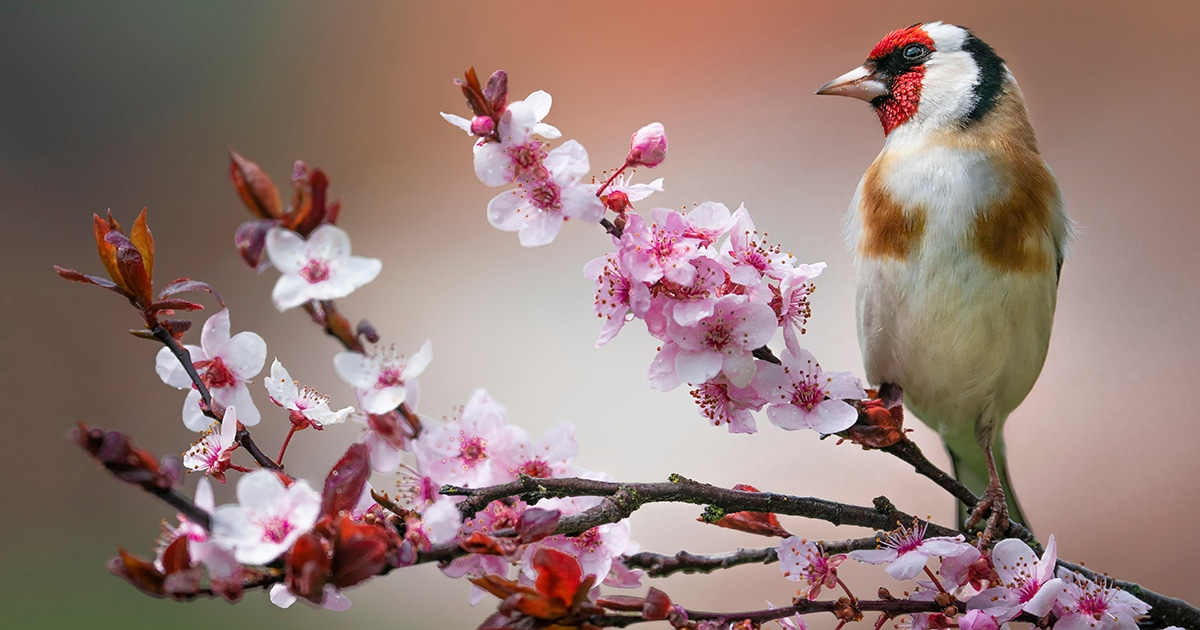 How Many Wild Birds Are There on Our Planet Earth? The Answer Might Surprise You