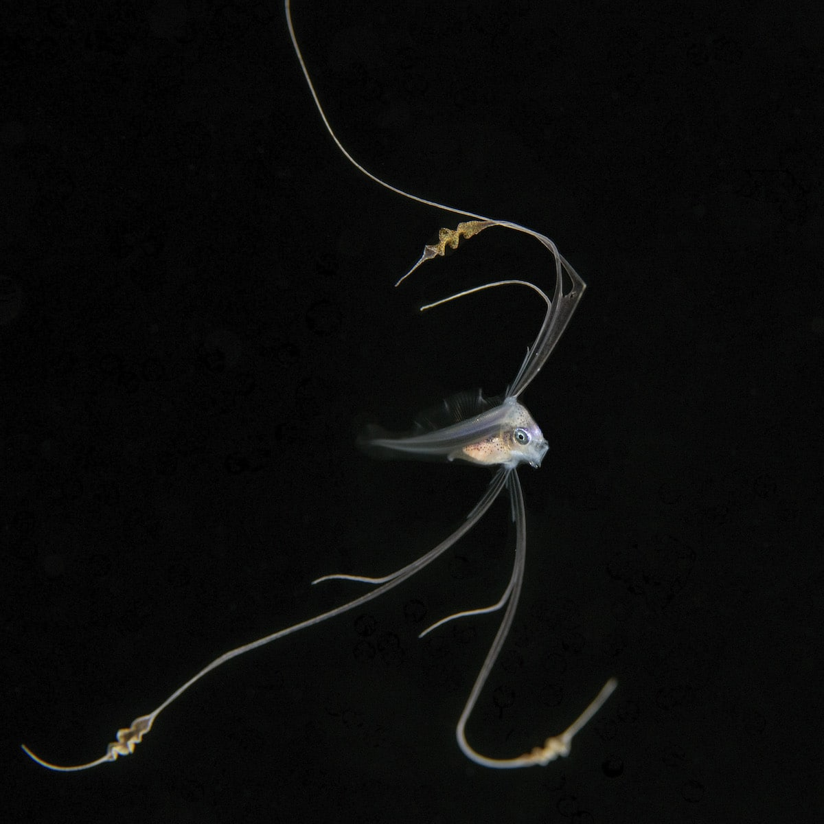 Underwater Sea Creatures by Jeff Milisen