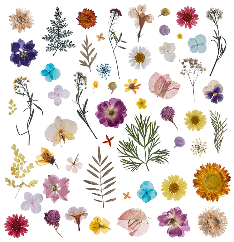 Pressed Flower Art and Crafts
